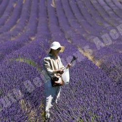 hot_day_collecting_lavender